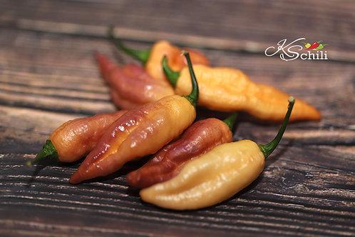 """""""Lion Shark F3"""" Pepper 8 Seeds (Capsicum Chinense)"""