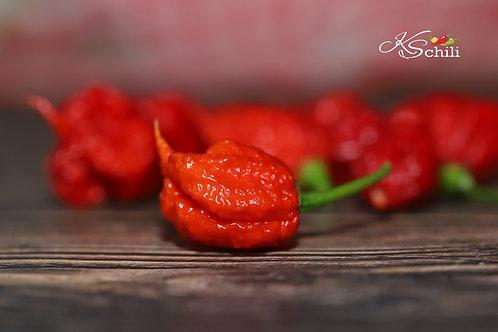 """""""7 Pot Primo"""" Pepper 8 Seeds (Capsicum Chinense)"""