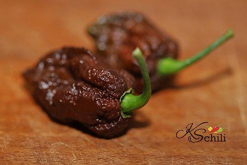 """""""Skunk Chocolate"""" Pepper 8 Seeds (Capsicum Chinense)"""