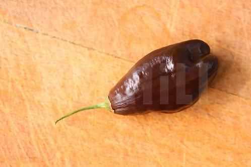 """""""Machu Picchu"""" Pepper 8 Seeds (Capsicum Baccatum)"""