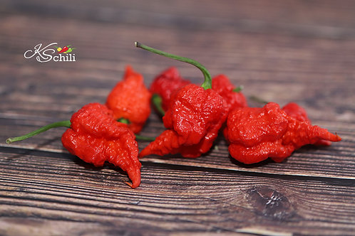 """Moruga Reaper"" Pepper 8 Seeds (Capsicum Chinense)"