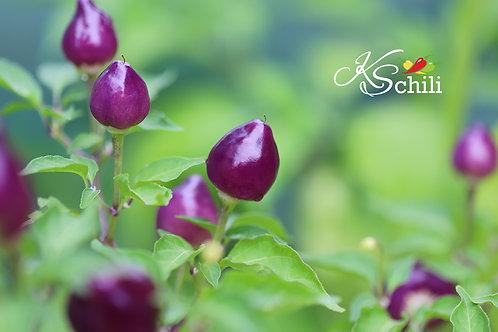 """""""Pimenta Barra Do Ribeiro"""" Pepper 8 Seeds (Capsicum Baccatum)"""