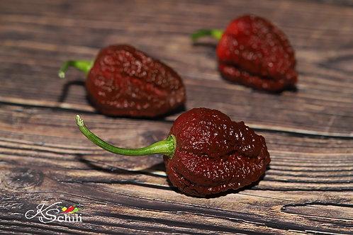 """""""Hell Boy F1"""" Pepper 8 Seeds (Capsicum Chinense)"""