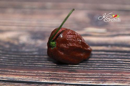 """""""Trinidad Douglah"""" Pepper 8 Seeds (Capsicum Chinense)"""