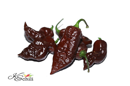 """Blue Ghost Chocolate"" Pepper 8 Seeds (Capsicum Chinense)"