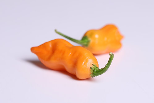 """Peach Ghost Scorpion"" Pepper 8 Seeds (Capsicum Chinense)"