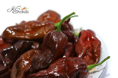 """Trinidad Scorpion Chocolate Long"" Pepper 8 Seeds (Capsicum Chinense)"