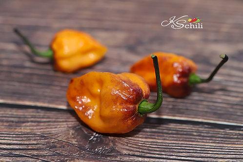 """""""Pockmark Orange"""" Pepper 8 Seeds (Capsicum Chinense)"""