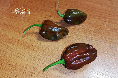 """Jamaican Hot Chocolate"" Pepper 8 Seeds (Capsicum Chinense)"