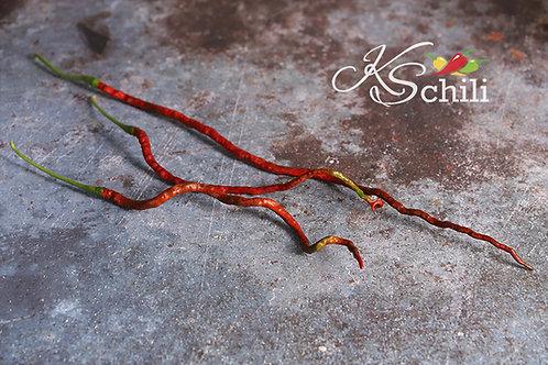 """Thunder Mountain Longhorn"" Pepper 8 Seeds (Capsicum Annuum)"