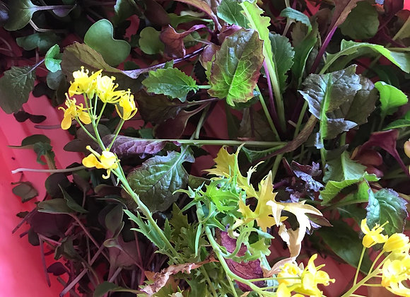 Microgreens tray