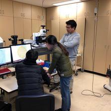 Axio imager microscope