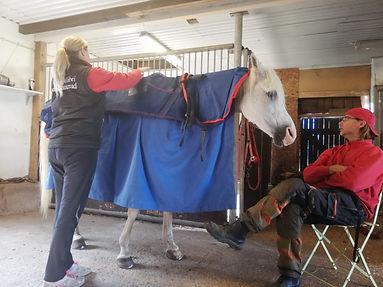 Vi har hela hästen i fokus.jpg