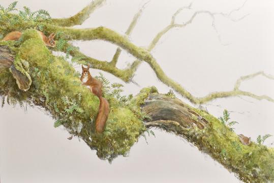 Squirrel Branch