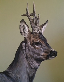 roe stag