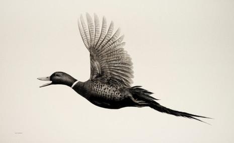 Flying Phuck