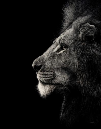 Masai Lion at first Light