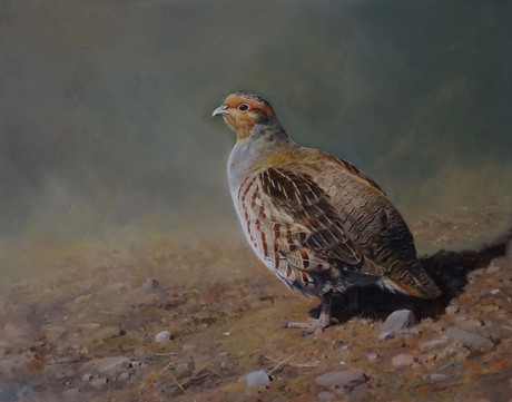 Grey Partridge I