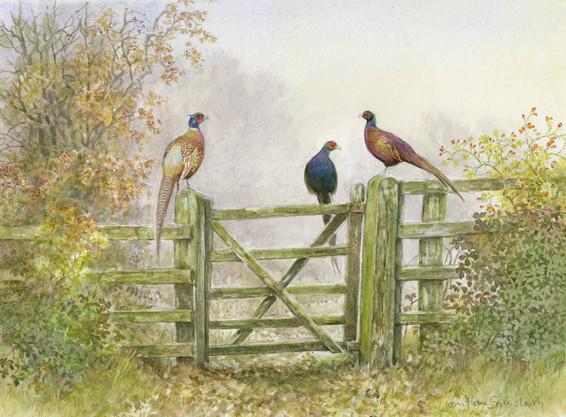 Pheasants on a Gate