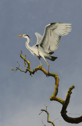 Heron on Branch