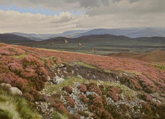 Highland Grouse