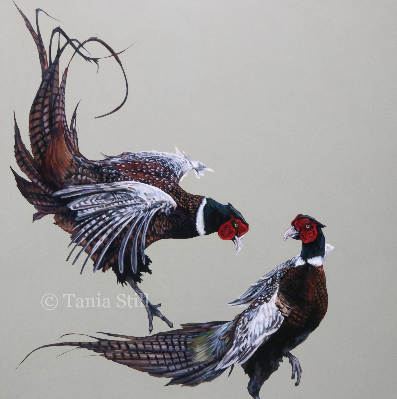 compton-pheasant-sparring