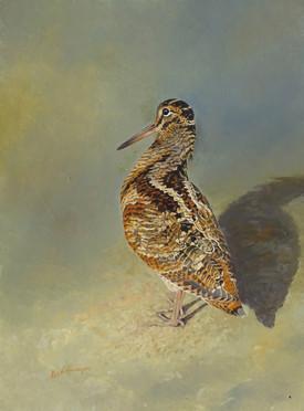 Standing Woodcock