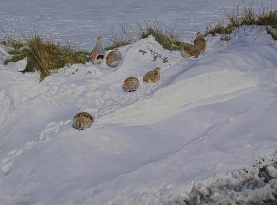 Snow Drift Partridges