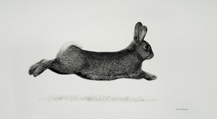 Bolting Rabbit