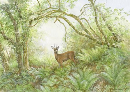 Roe Deer Wood