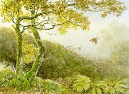 Flying Woodcock