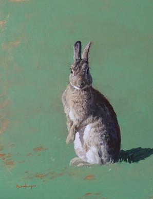 Rabbit on its Haunches
