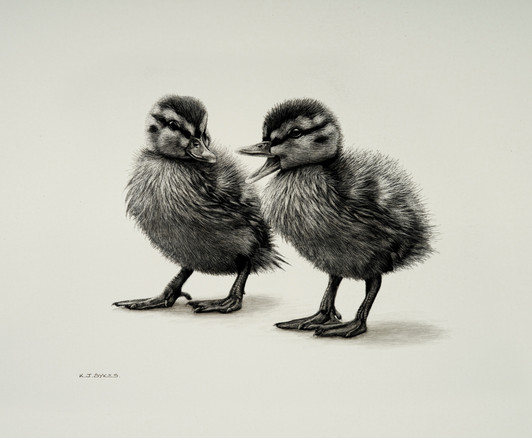 Mr & Mrs Duckling