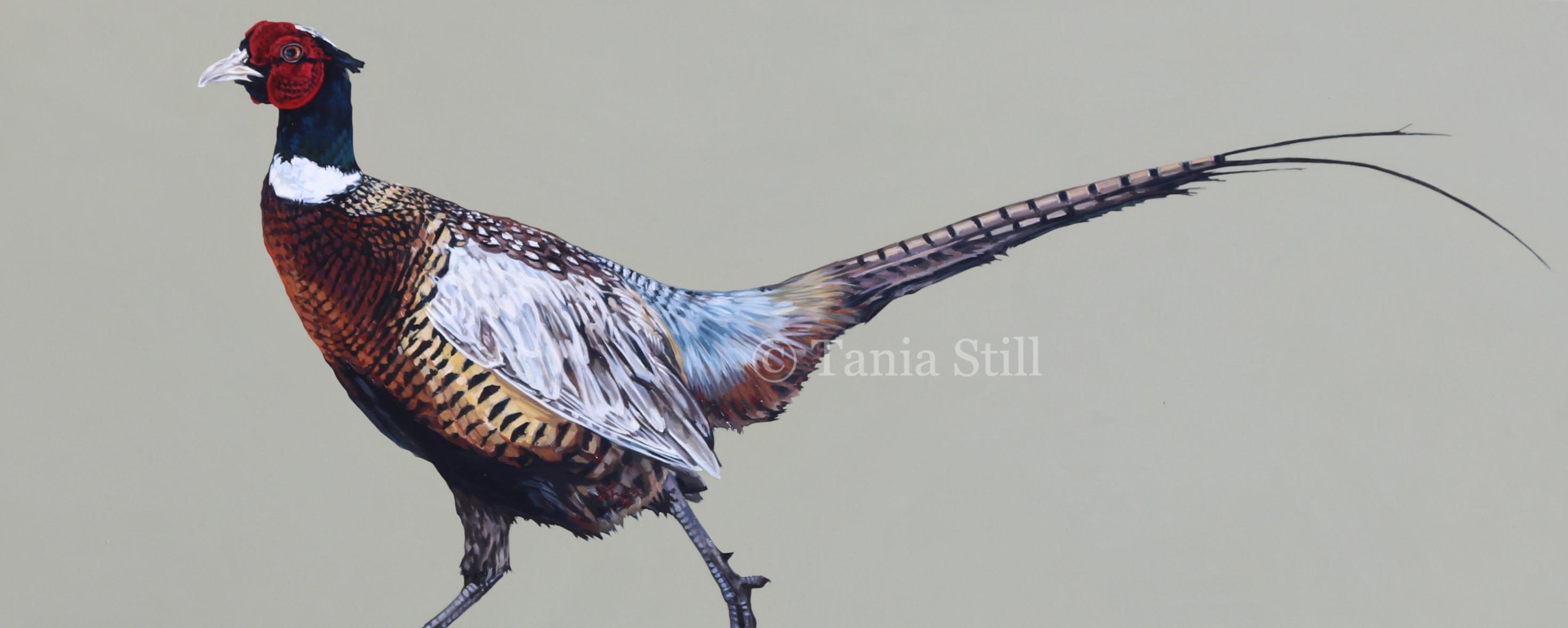 compton-pheasant