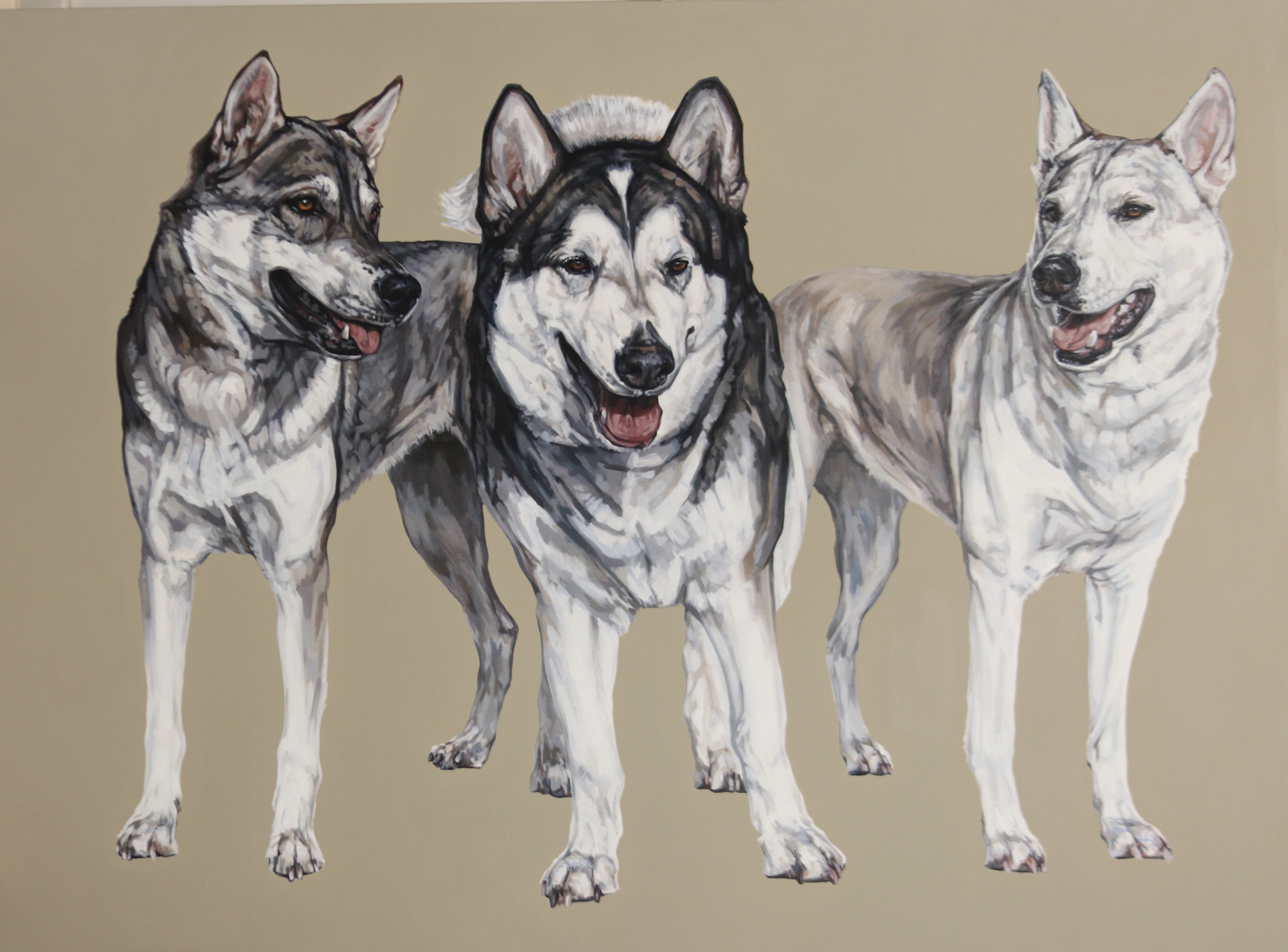 wolf dogs