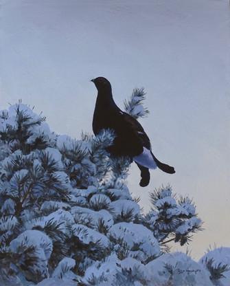 Winter Blackcock