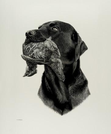 Labrador & Partridge