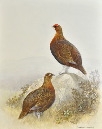 Two Red Grouse
