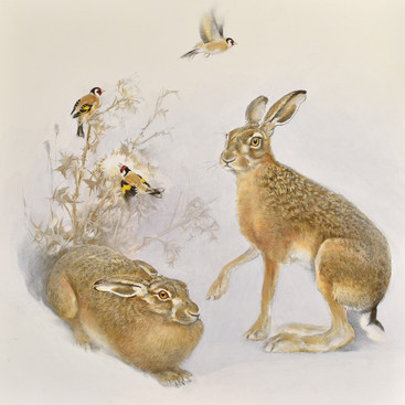 Brown Hares and Goldfinches