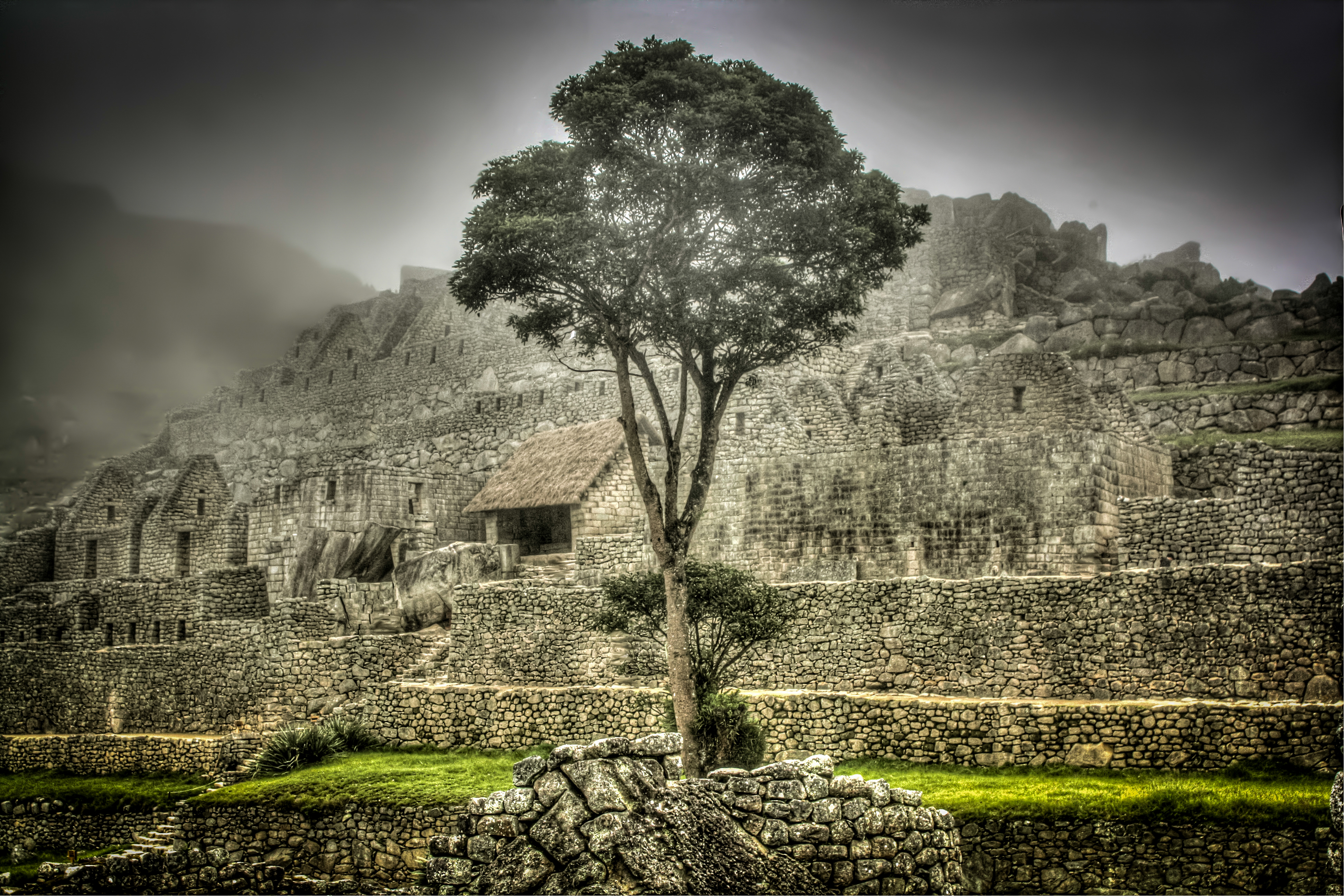 The Tree at Machu Picchu