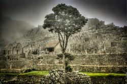 The Tree at Machu Picchu
