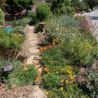 Garden 4.png