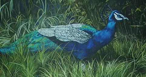 Peacock, No Fanfare