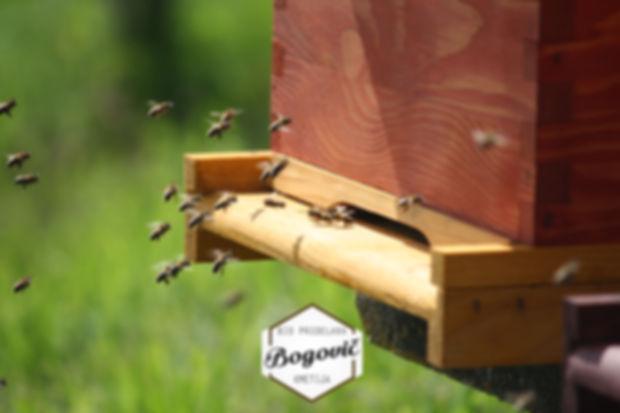 Eko čebelarstvo