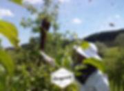 Roj čebel