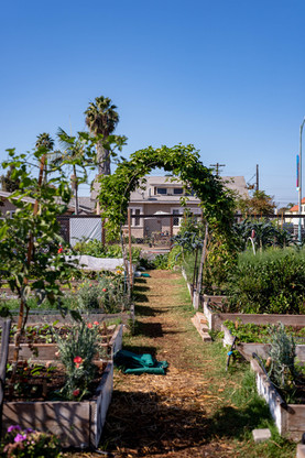 MAKE Projects Garden - Photo by Olivia H