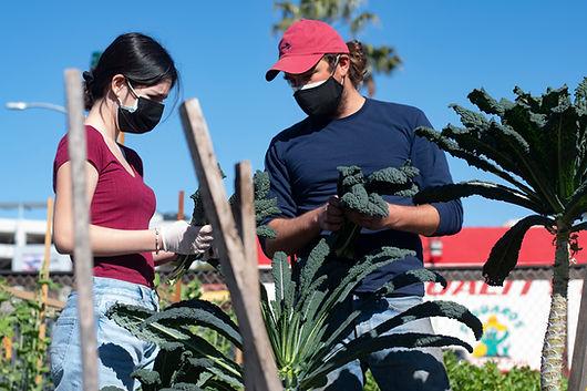 MAKE Projects Youth FarmWorks Internship Interest Form