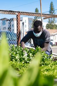 Youth FarmWorks Intern