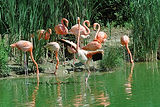 Le-Parc-des-Oiseaux.jpg