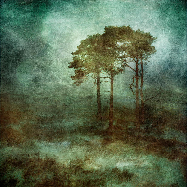 Mark Munroe Preston - Diabond prints on